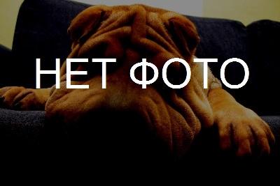 Пропала собака вест терьер в микрорайоне Чижовка