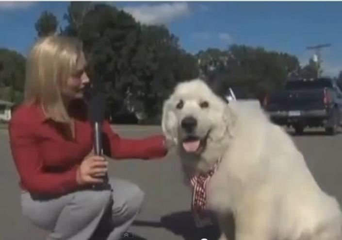 Фермерский пес избран мэром американского поселка
