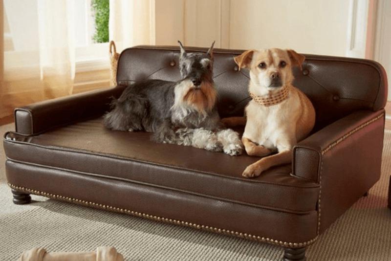 14 бесполезных, но милых изобретений для собак