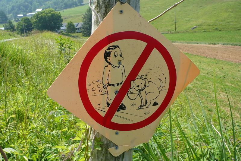 В Витебске появилась первая обустроенная площадка для выгула собак