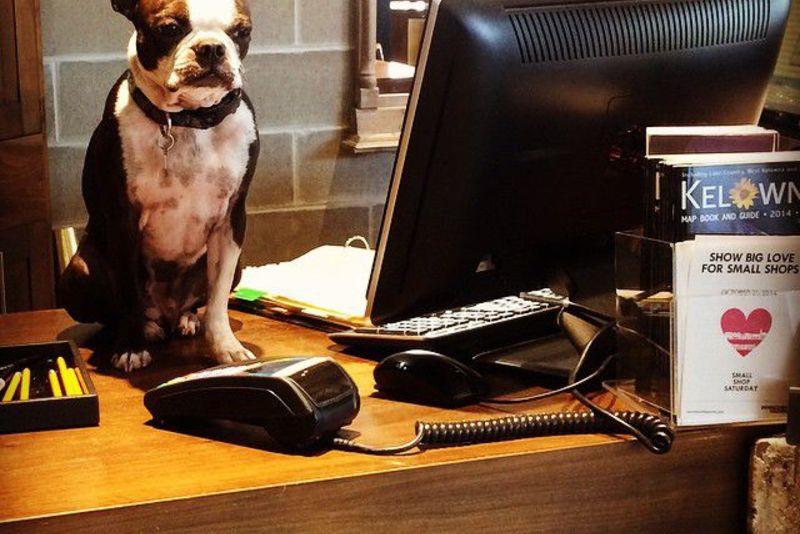 30 собак, которые работают лучше нас