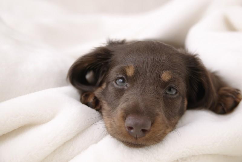 Зоозащитники выступают за обязательную стерилизацию домашних животных