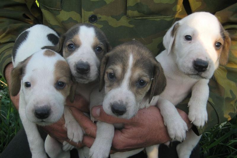 Знаменитые русские породы собак