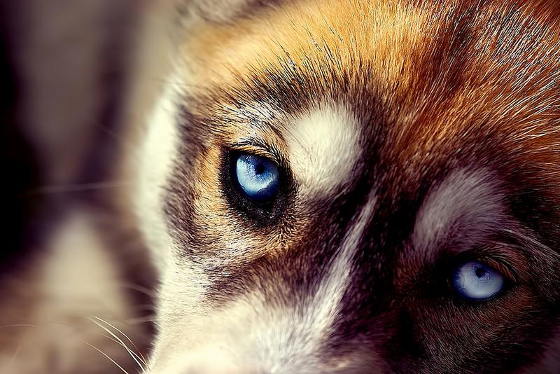 В Беларуси введена уголовная ответственность за жестокое обращение с животными