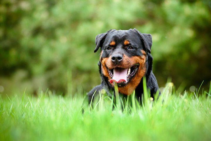 Обзор популярных пород собак