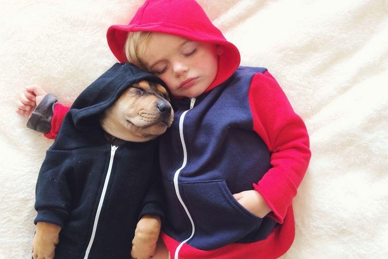 Ученые объяснили дружбу между собакой и человеком