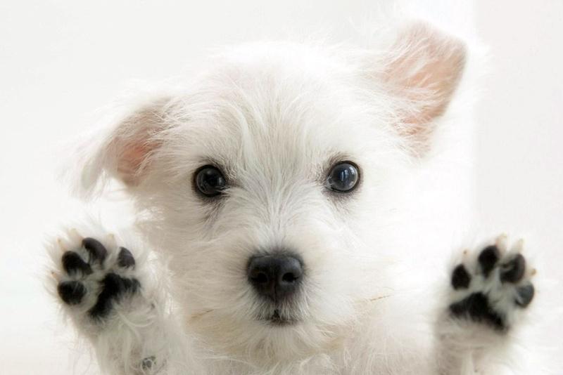 Закон по защите прав животных в Беларуси