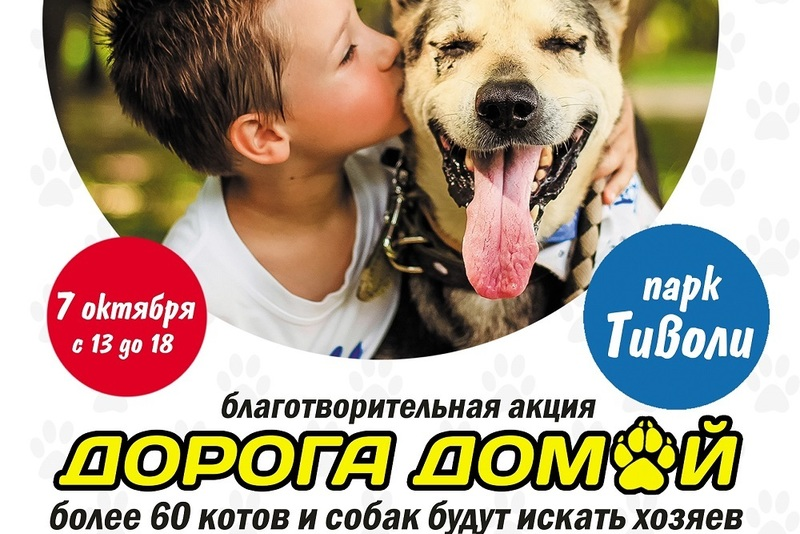 7 октября 2017 года ООЗЖ Эгида проведет благотворительную акцию «Дорога домой»