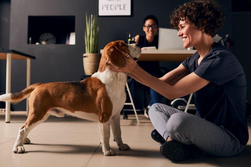 Терапевтическая польза собак